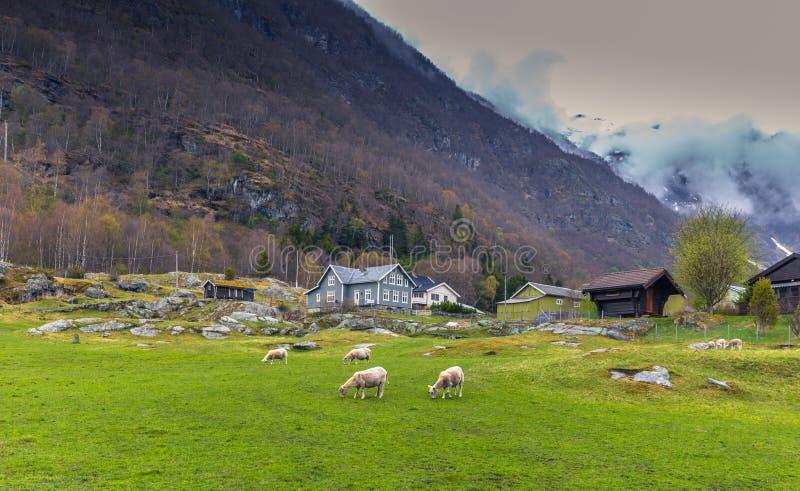 Borgund, Noruega - 14 de maio de 2017: Casas na vila de Borgund fotografia de stock
