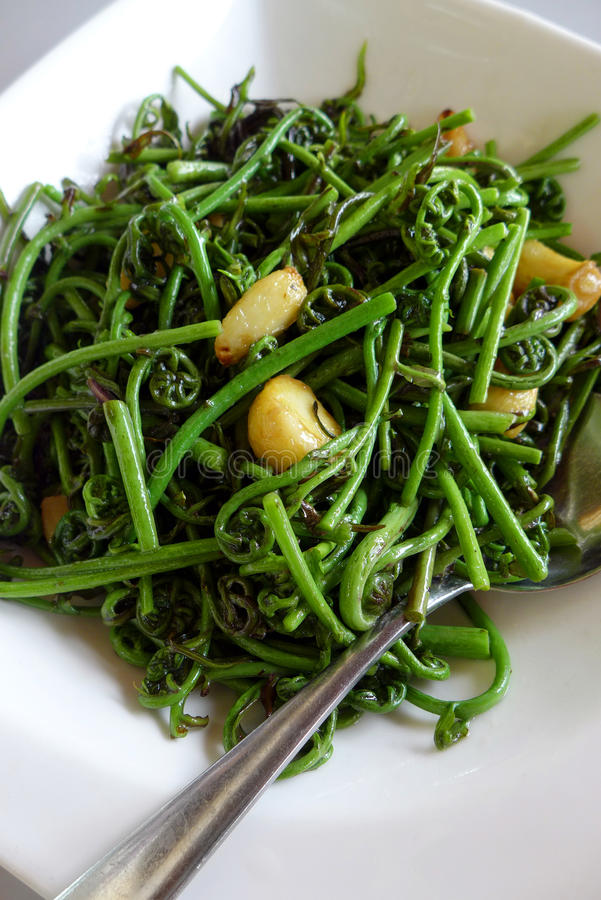Free Bornean Local Dish - Fresh Jungle Ferns Stir Fry Stock Images - 28584514