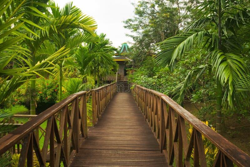 borneo dżungli sepilok przejście drewniany zdjęcia stock