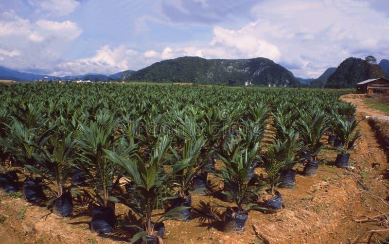 Borneo: Een reusachtige palmolieinstallatie, waar bfore er het regenwoud was royalty-vrije stock afbeeldingen