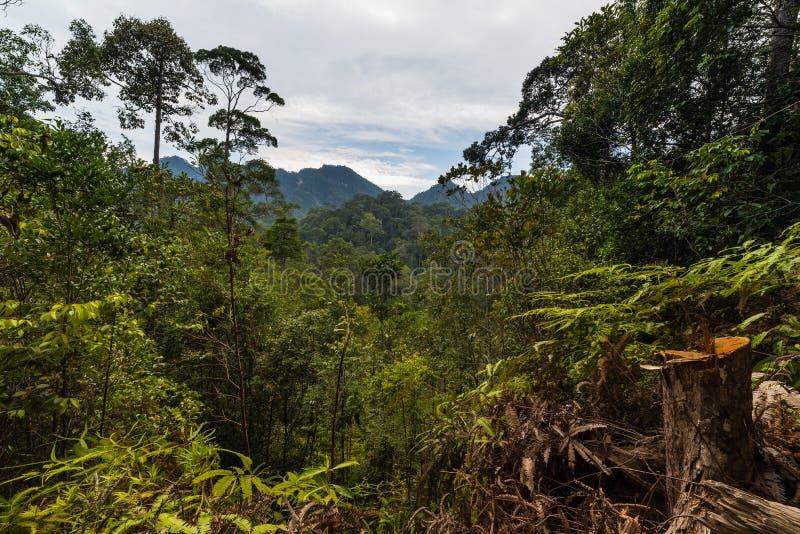 Borneo rainforest royalty free stock photo