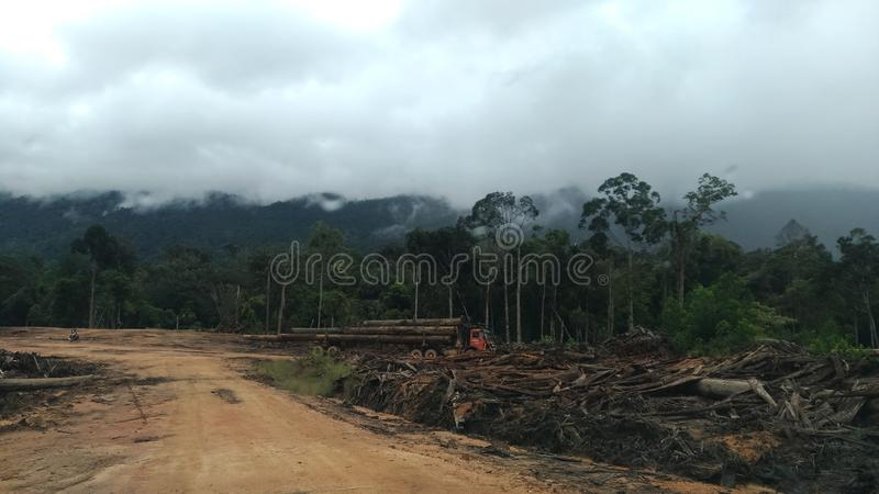 Borneo& x27; s dżungla zdjęcie royalty free