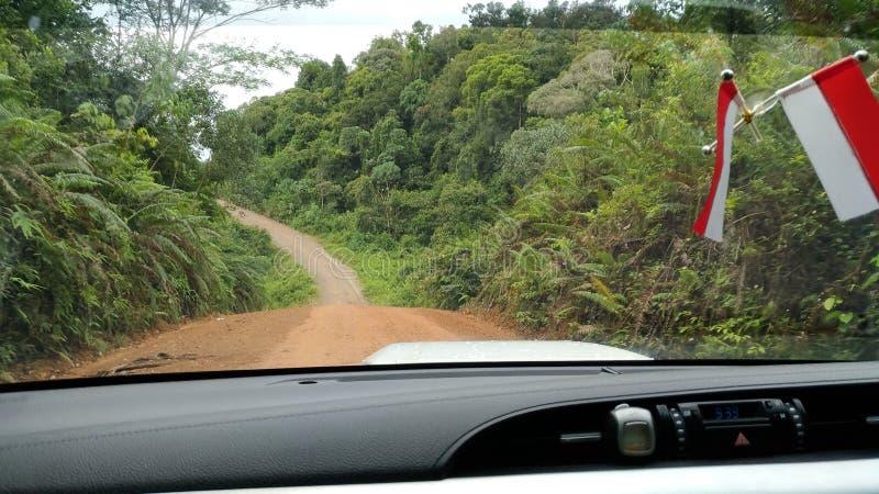 Borneo& x27; s dżungla obrazy stock