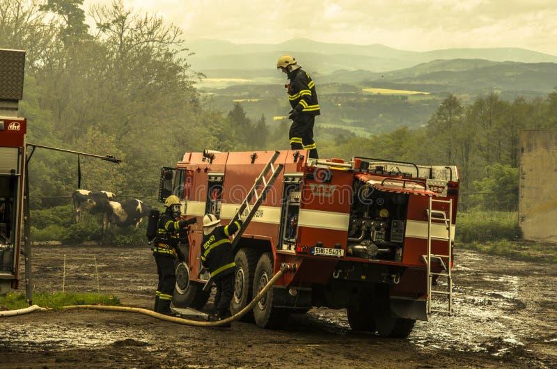 Borova, Czechia - 11. Mai 2014 Feuerwehrmänner, die Vieh von einer Scheune retten, die brennt stockfotos