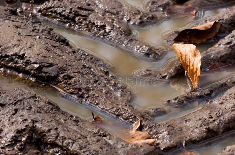borowinowi ślada zdjęcie stock
