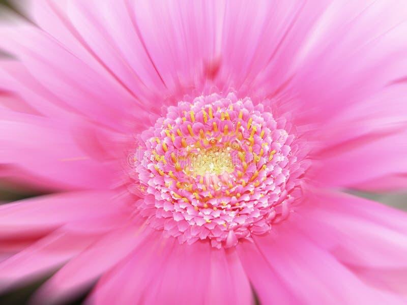 Borrão da flor imagem de stock royalty free