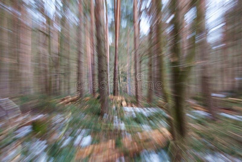 Borrão das madeiras do inverno foto de stock