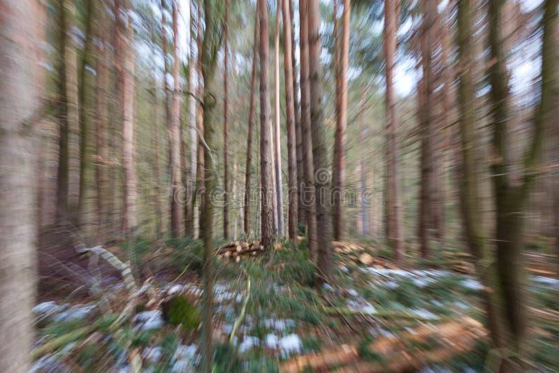 Borrão das madeiras do inverno fotografia de stock