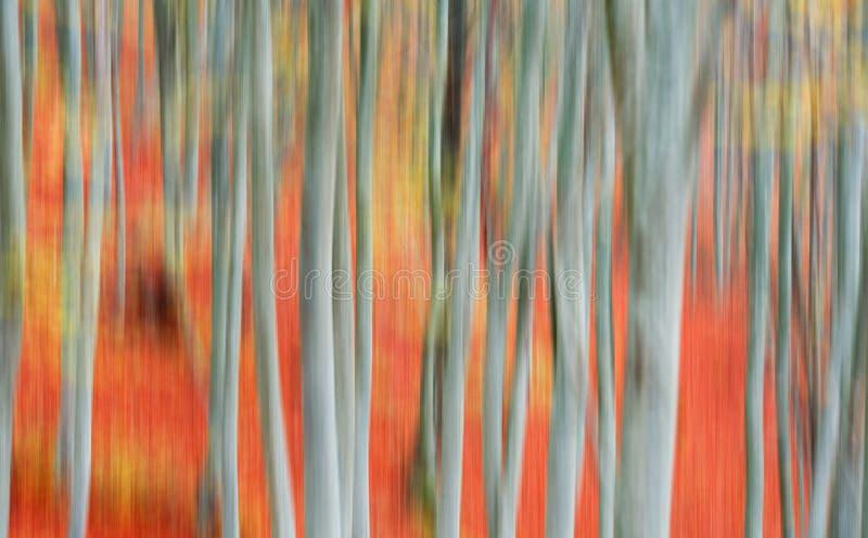 Borrão de movimento das árvores foto de stock