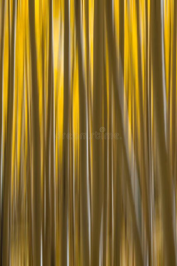 Borrão de movimento de Aspen Tree Abstract imagens de stock royalty free