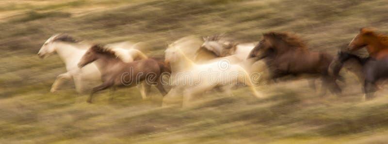 Borrão running do cavalo imagens de stock royalty free