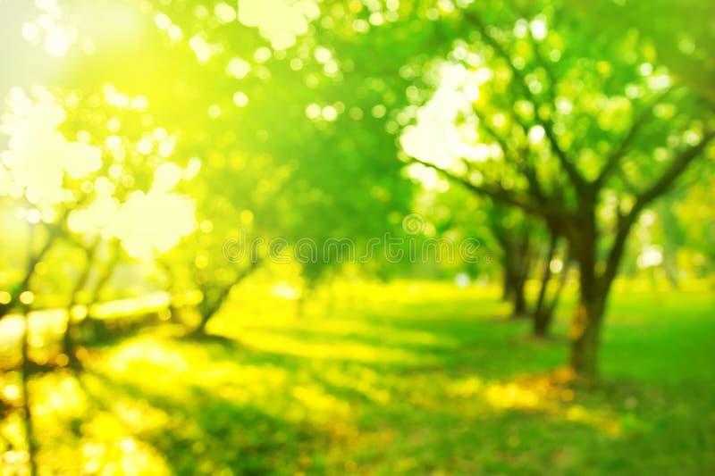 Borre a árvore verde da natureza no jardim com manhã macia SU brilhante foto de stock