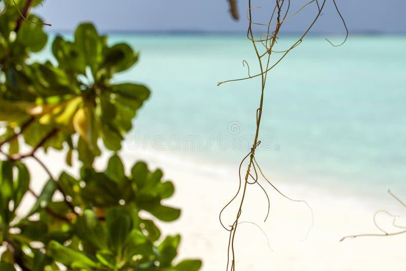 Borre as folhas bonitas do verde da natureza na praia tropical com fundo do sumário da onda clara do sol do bokeh fotografia de stock royalty free