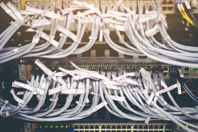Borre cabos ethernet com cinzento e o conector branco da cor obstrui dentro fotografia de stock