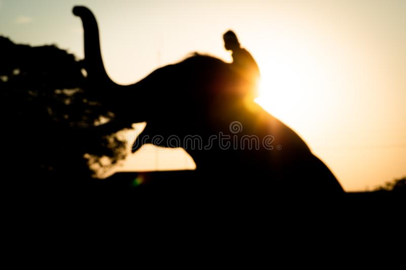 Borre a fotografia da silhueta do elefante e do homem no por do sol fotografia de stock royalty free