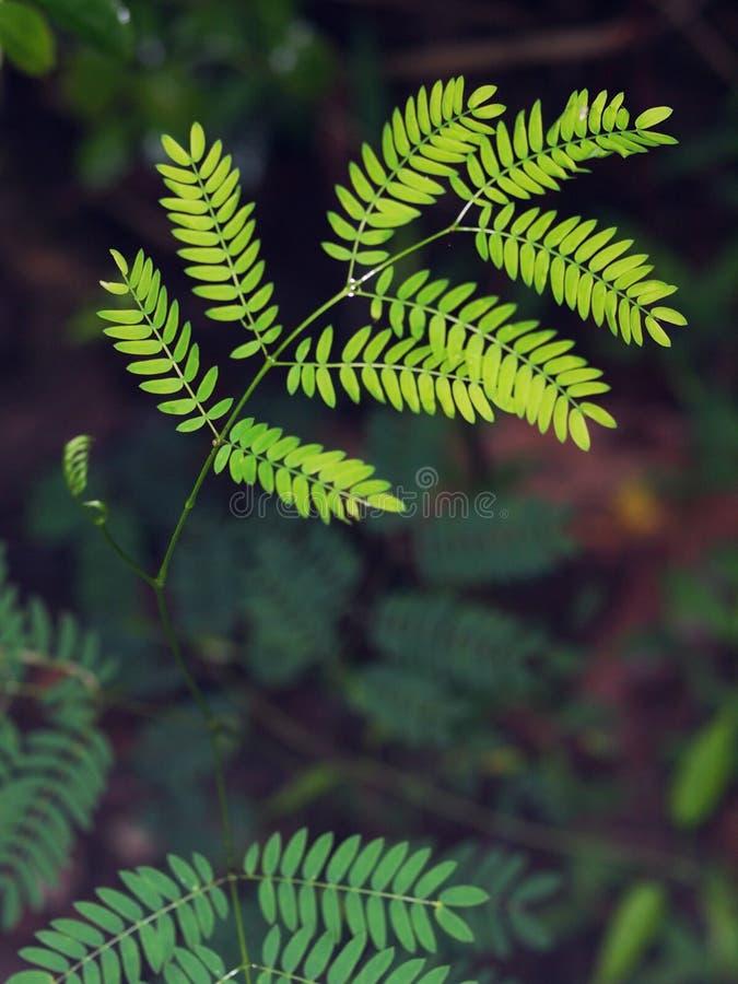 Borre o fundo à terra com as folhas minúsculas novas da planta verde foto de stock