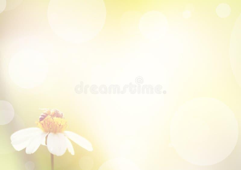 Borre o fundo do sumário da natureza, abelha na flor branca imagem de stock royalty free