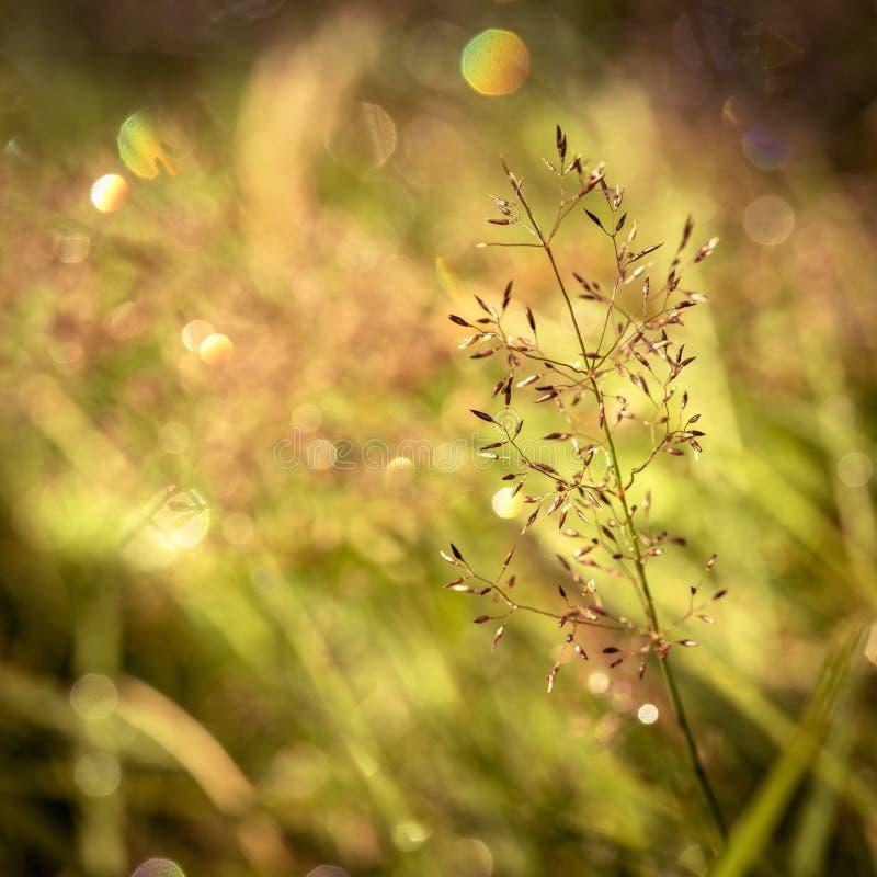 Borre o parque verde da natureza com fundo do sumário da luz do sol do bokeh Copie o espaço da aventura do curso e do conceito do imagens de stock