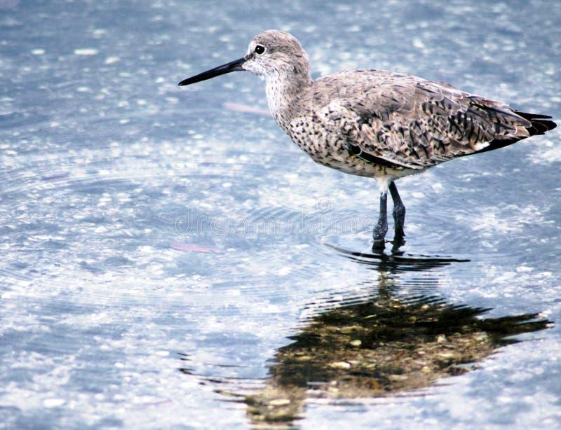 Download Borrelho foto de stock. Imagem de nave, piper, água, lagoa - 55694