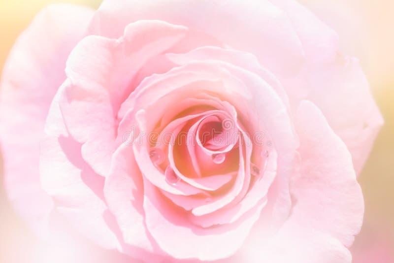 Borroso de rosas dulces del color en fondo suave de la falta de definición imagenes de archivo