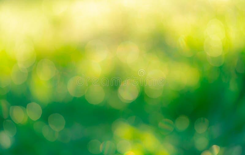 Borrou o campo de grama verde fresco no amanhecer Grama verde com fundo do bokeh na mola Fundo da natureza limpo fotografia de stock royalty free