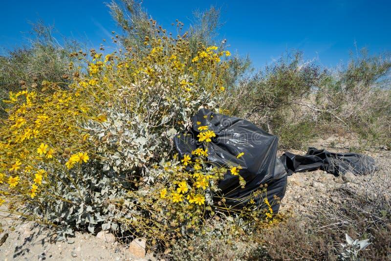 Borsa di immondizia dei rifiuti abbandonata nel deserto, accanto ai bei wildflowers gialli Contenuto la regione di mare di Salton fotografia stock