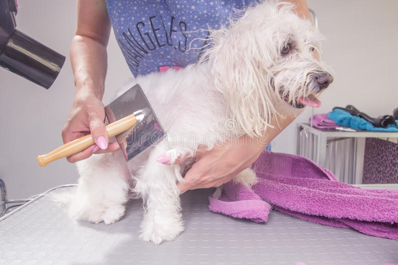 Borsta för hårkam för hundhår torrt royaltyfria foton