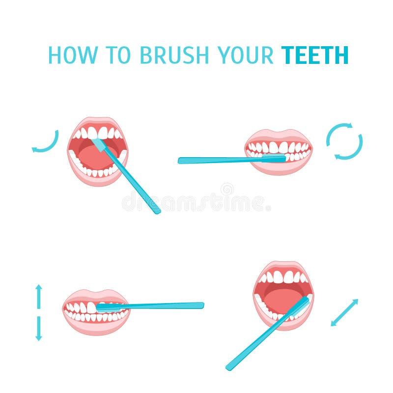 borste hur tänder till ditt vektor stock illustrationer