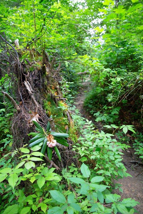 Borste och frodig skog royaltyfri bild