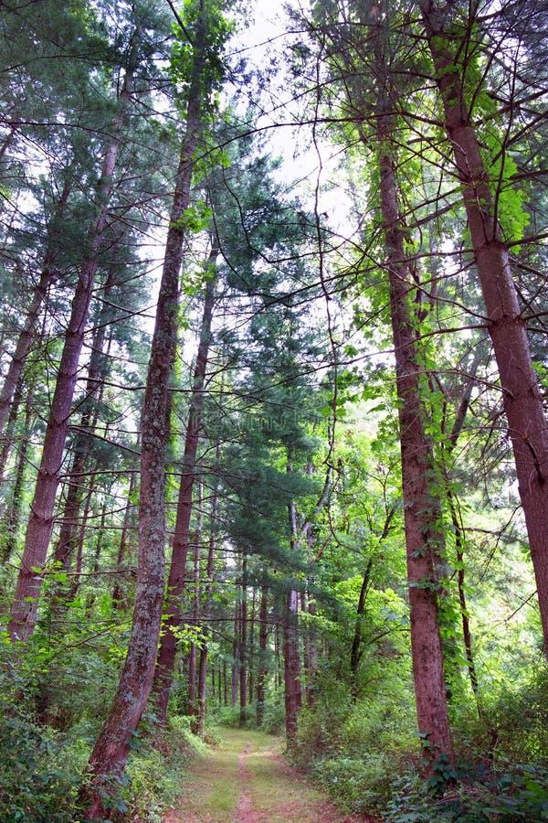 Borste och frodig skog arkivfoto