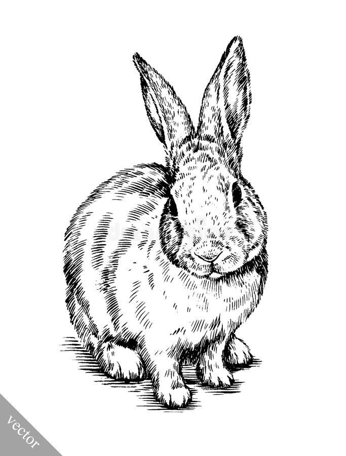 Borstel het schilderen de inkt trekt geïsoleerde konijnillustratie vector illustratie