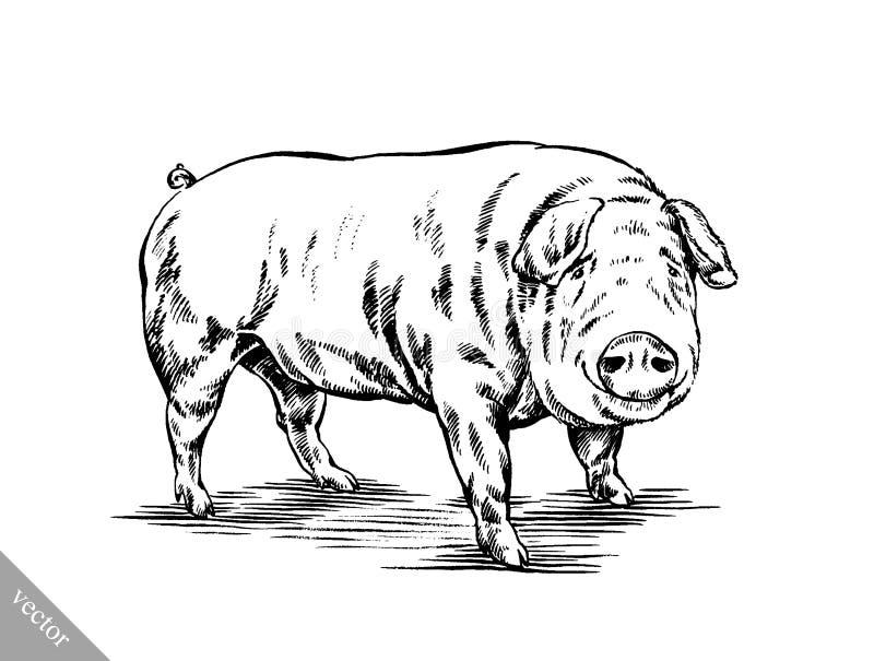 Borstel het schilderen de inkt trekt varkensillustratie royalty-vrije illustratie