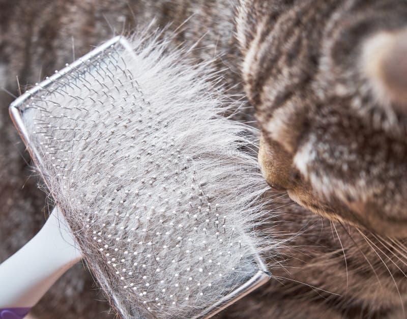 Borstelend cat's bont stock afbeelding