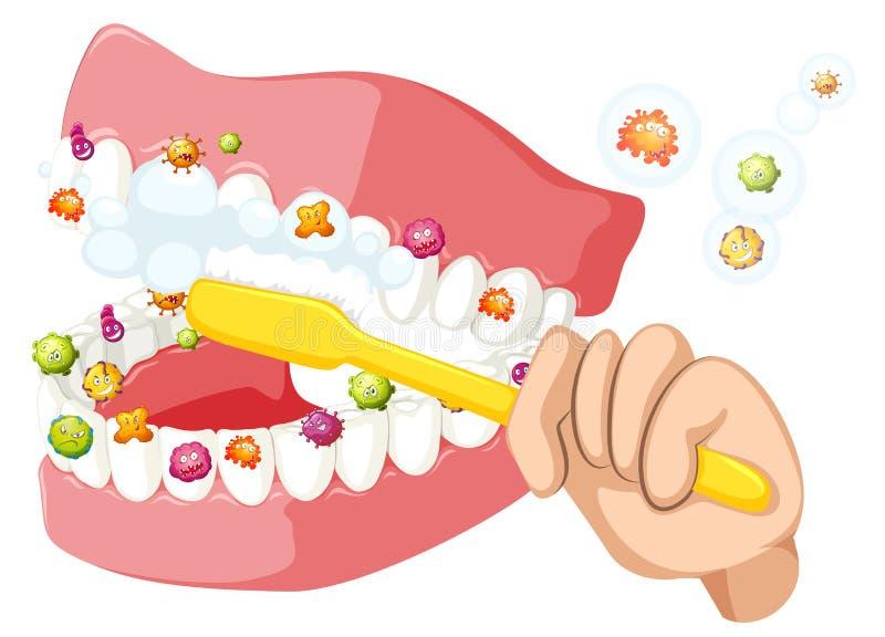 Borstelende tanden en opruimingbacteriën stock illustratie