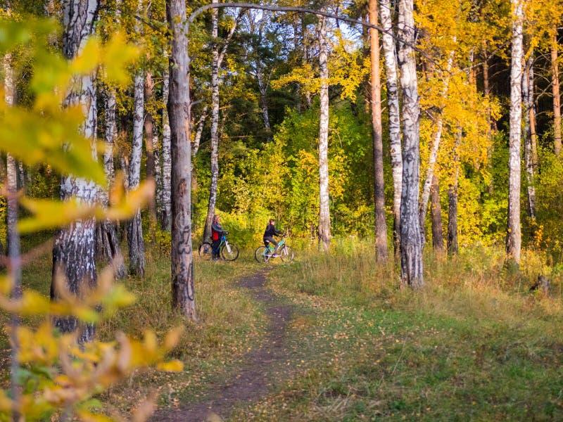 Bortgången för skogväg till och med härliga färgrika cyklister för en höstskog rider i parkera fotografering för bildbyråer