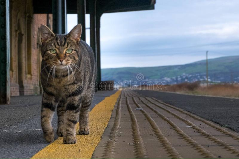 Borth Station cat. Resident cat on the platform at Borth Railway Station, Ceredigion, Wales waiting for a train stock photo