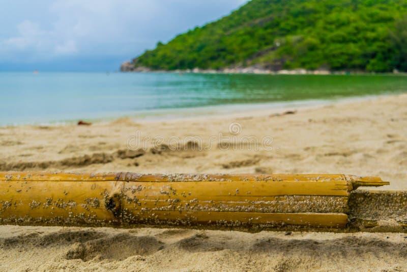 Borttappad bambu på Koh Phangan royaltyfria bilder