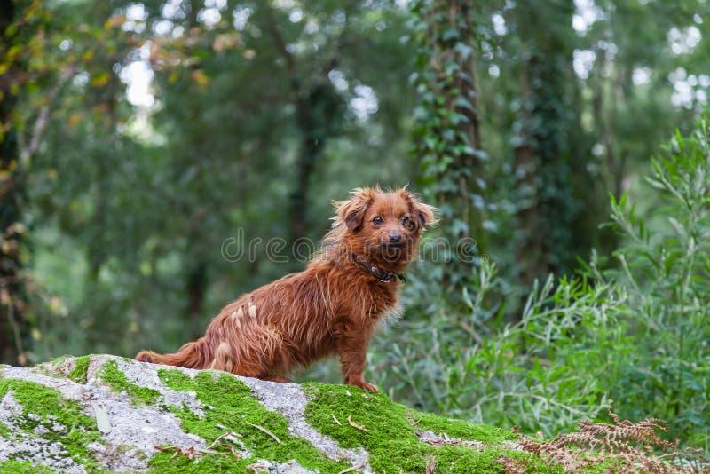 Borttappad eller övergiven liten hund under vintern royaltyfria bilder
