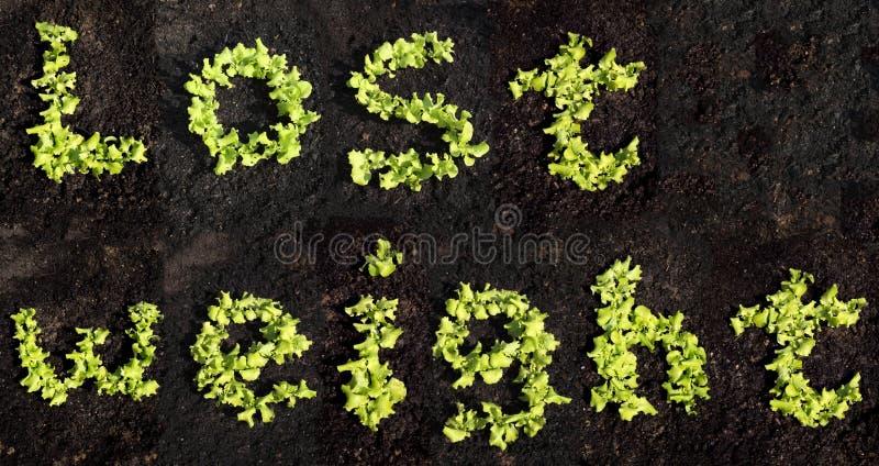 Borttappad vikt med grönsallat arkivfoton