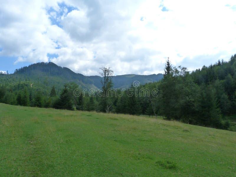 Borzhava乌克兰喀尔巴汗的山脉在Transcarpathian地区 乌克兰 夏天2016年 图库摄影