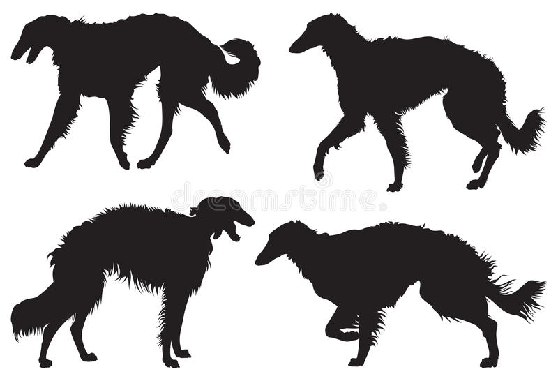Borzoi – Russian Wolfhound Dog Breed Silhouettes. Vector illustration from Dog Show series royalty free illustration