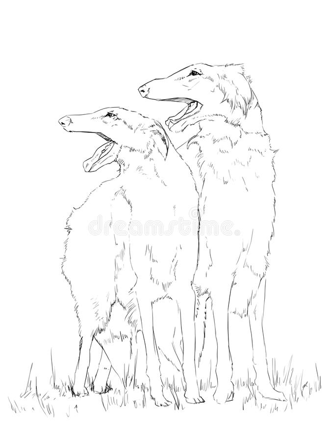 Borzoi dog pencil drawing. Monochrome stock illustration