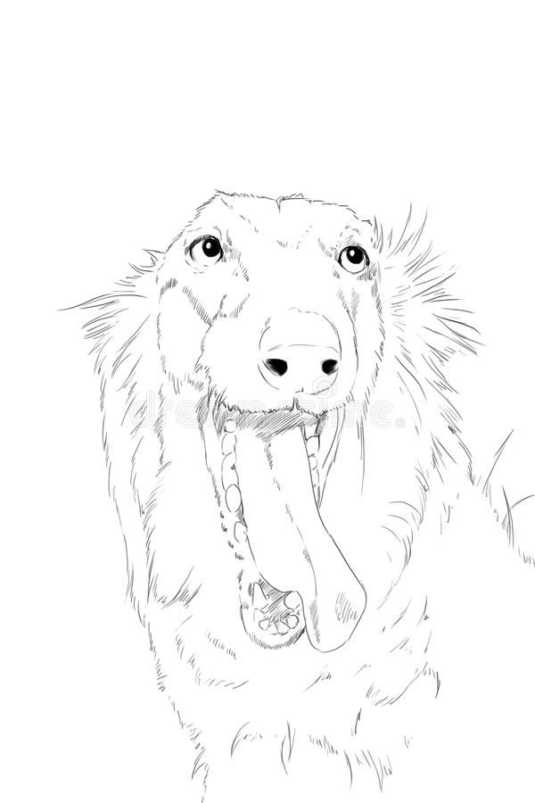 Borzoi dog scetch, pencil drawing. Borzoi dog, pencil drawing in paper stock illustration