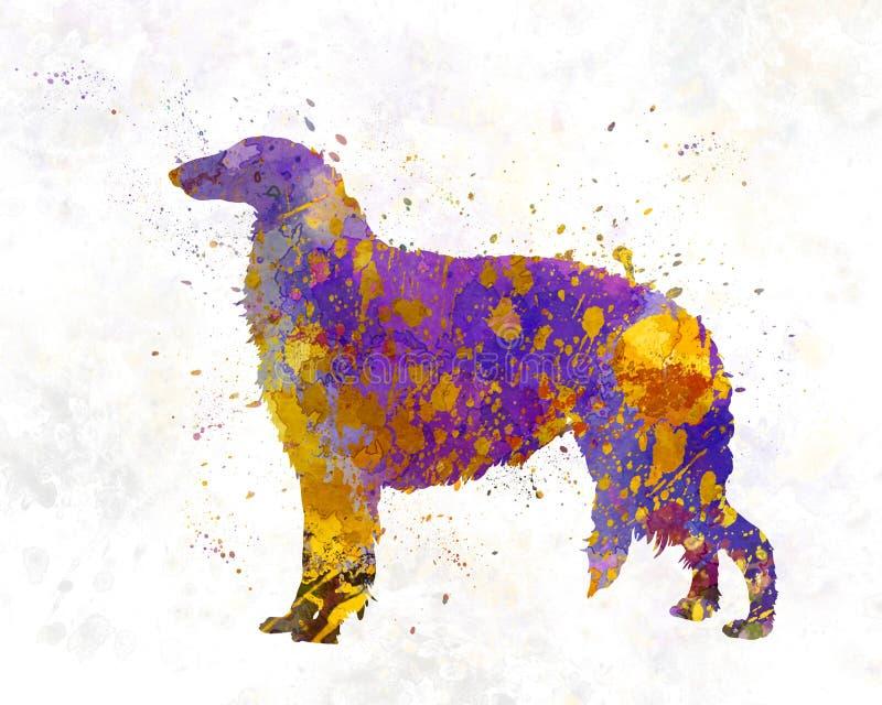 Borzoi in watercolor. Borzoi in artistic abstract watercolor vector illustration