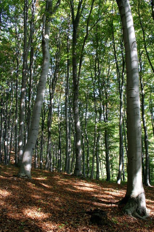 Download Bos stock foto. Afbeelding bestaande uit boom, ontspan - 275116