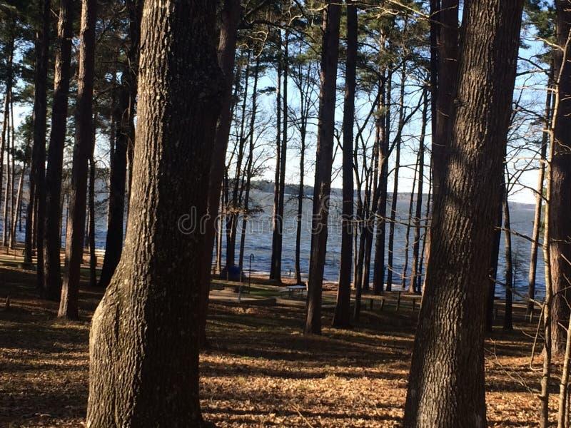 Bos aan lakeshore royalty-vrije stock afbeelding