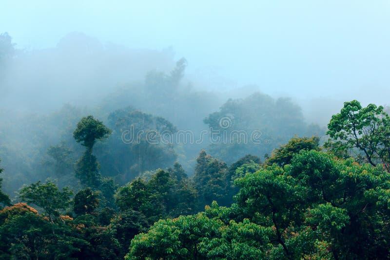 Bos in aard tijdens regenachtig seizoen stock afbeelding