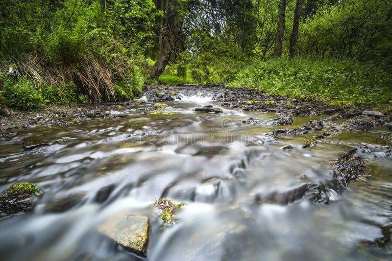 Bos beek, Forest brook. Bos beek in de Eifel, Forest brook in the eifel stock image
