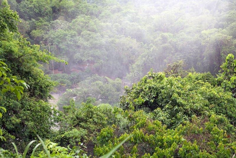 Bos bij het Nationale Park van Iguazu in de Argentijnse kant royalty-vrije stock foto