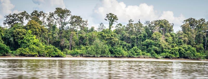 Bos bij riverbank stock afbeelding
